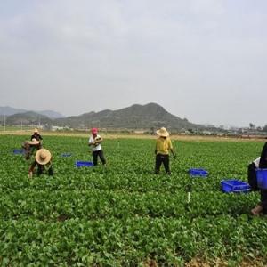 lehu6农产品乐虎国际电子游戏平台价格